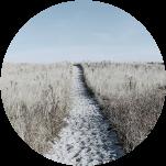 chemin dans une prairie